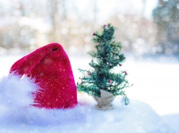 santa claus hat beside pine tree miniature
